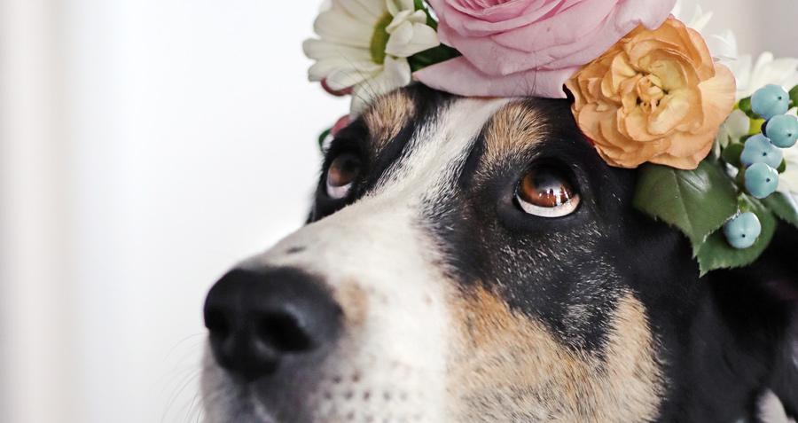 DIY Hundeblog Herr Olaf