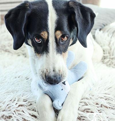 Spielzeug für Hunde nähen