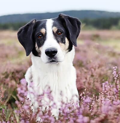Hundeblog: Der Hund Olaf