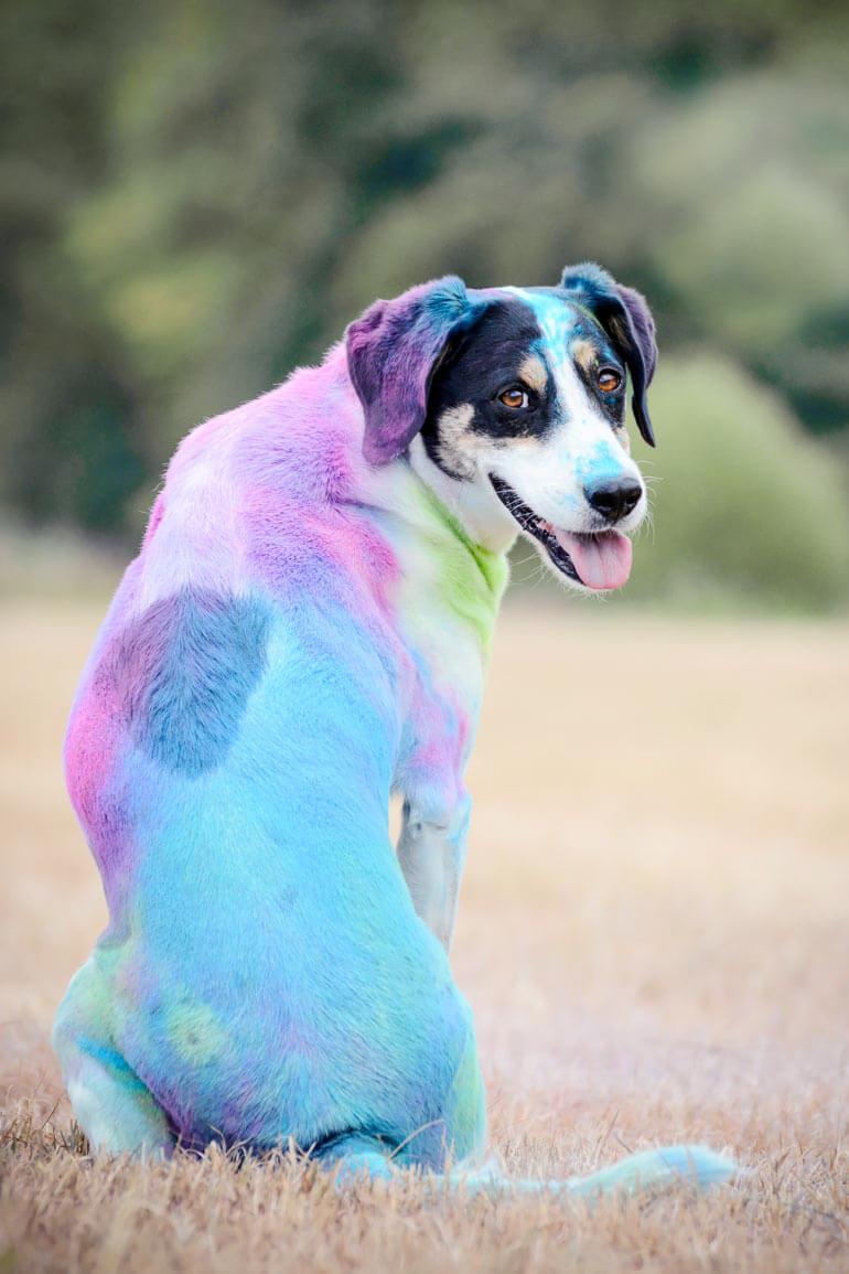 Hundeblog mit Bastelanleitungen, Rezepten und Ideen für Hunde