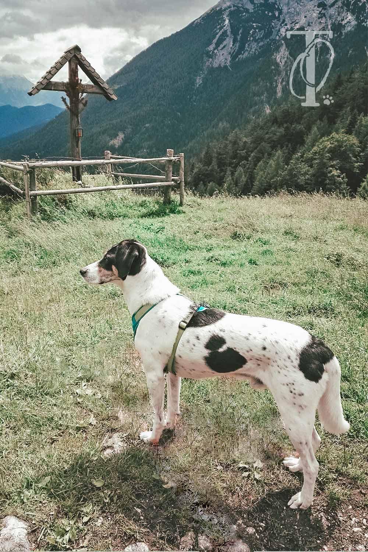 Hund vor dem Gipfelkreuz