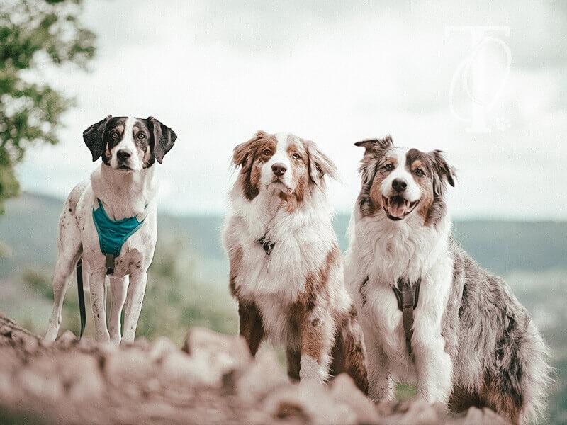 Zusammen mit dem Hund Zeit verbringen