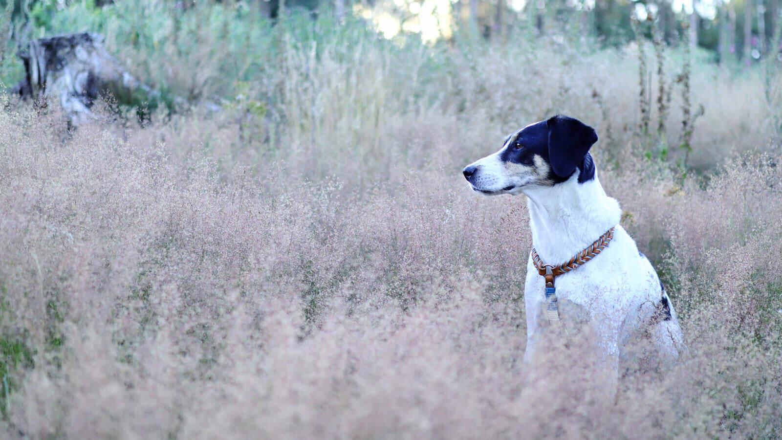 Hund in der Wiese sitzend
