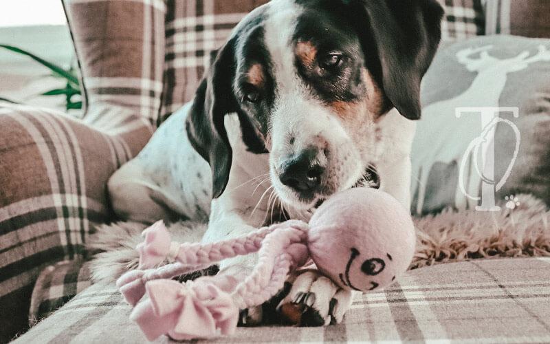 Hund spielt mit Spielzeug aus Fleece
