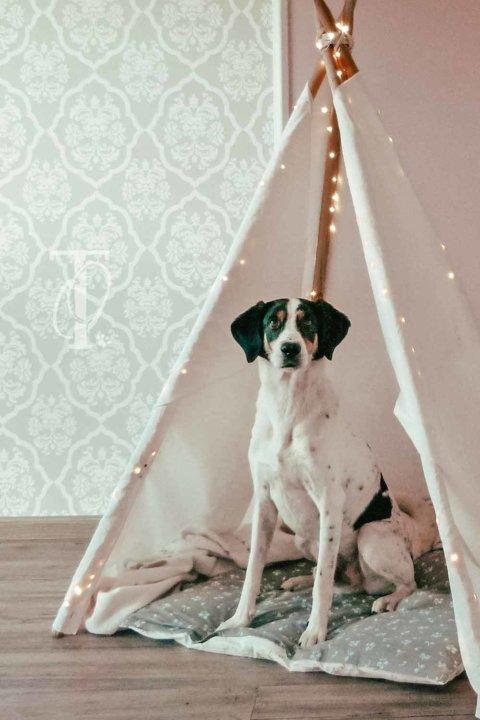 DIY: Ein Tipi-Zelt für deinen Hund bauen