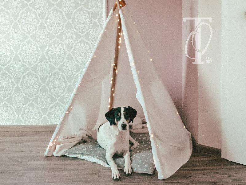 Ein DIY Tipi Zelt für Hunde bauen