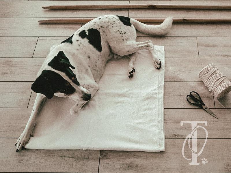 DIY Tipi-Zelt für deinen Hund bauen