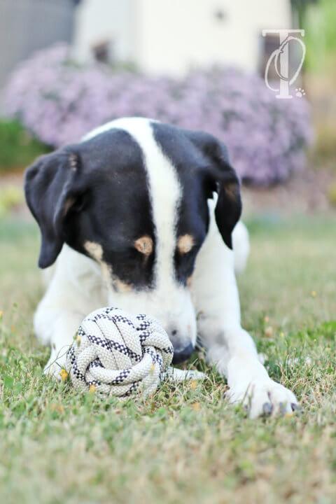 DIY: Affenfaust knoten – ein Hundespielzeug aus Seil selbermachen