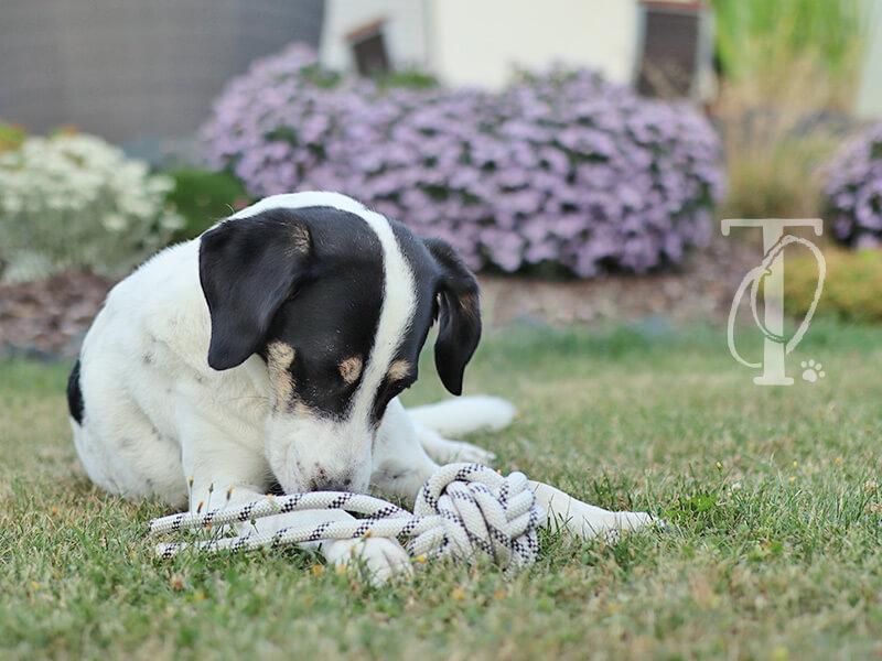 Hund mit Hundespielzeug aus Seil