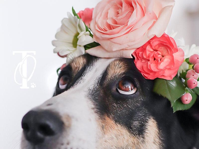 DIY Anleitung Flower Crown selbermachen