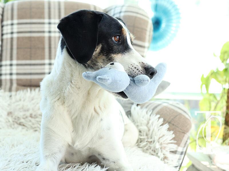 Socken werden durch das Upcycling-Projekt zum DIY Hundespielzeug