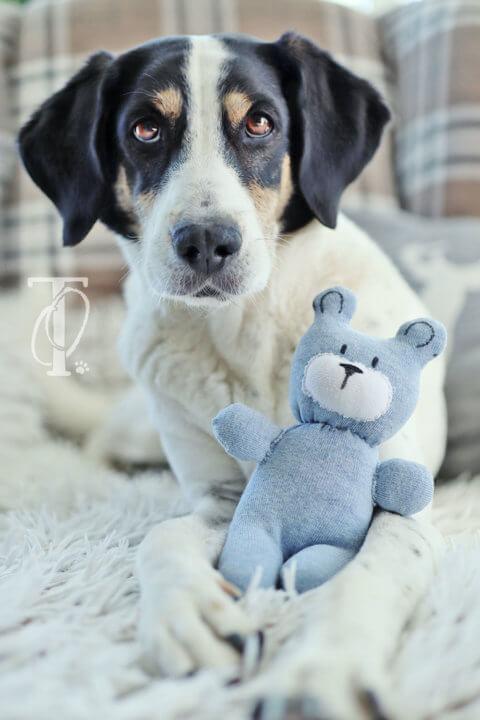 DIY: Einen Teddy aus Socken als Hundespielzeug nähen (Upcycling)
