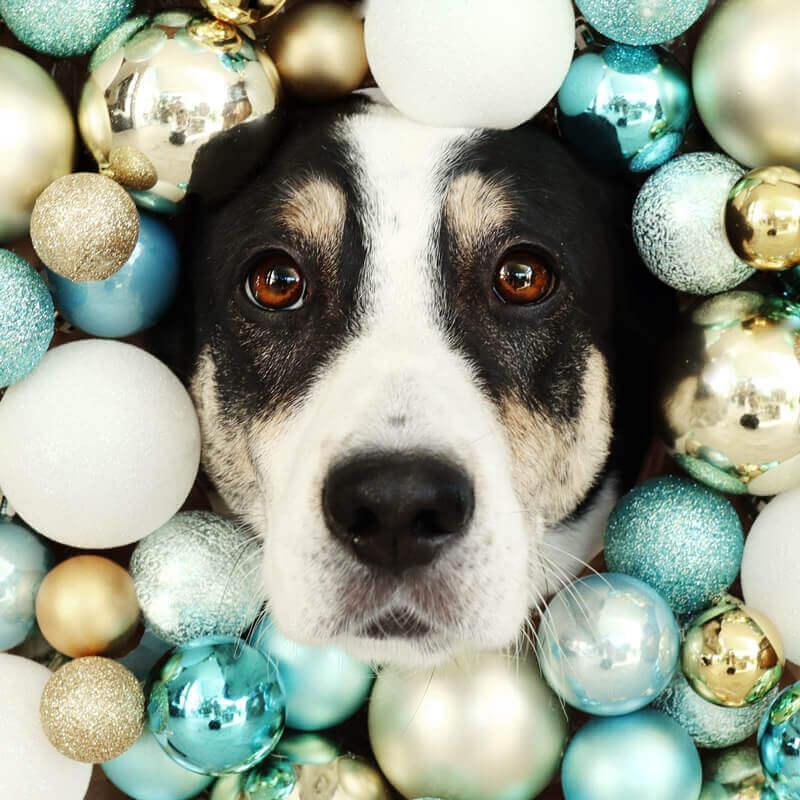 Foto-Trick: Weihnachtsfoto mit Hund