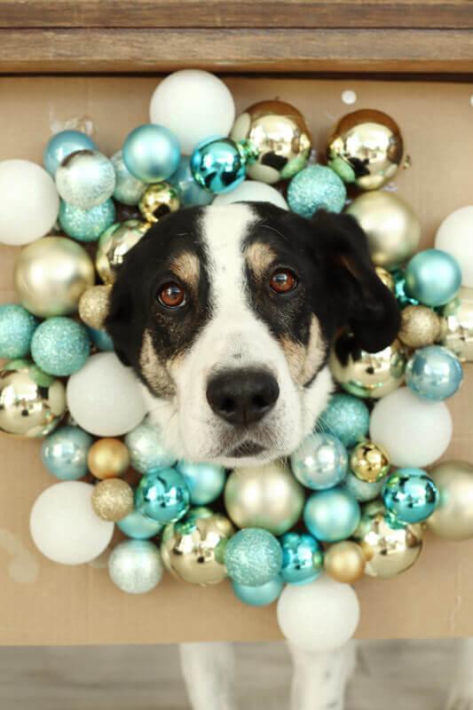 Hunde Foto Weihnachten