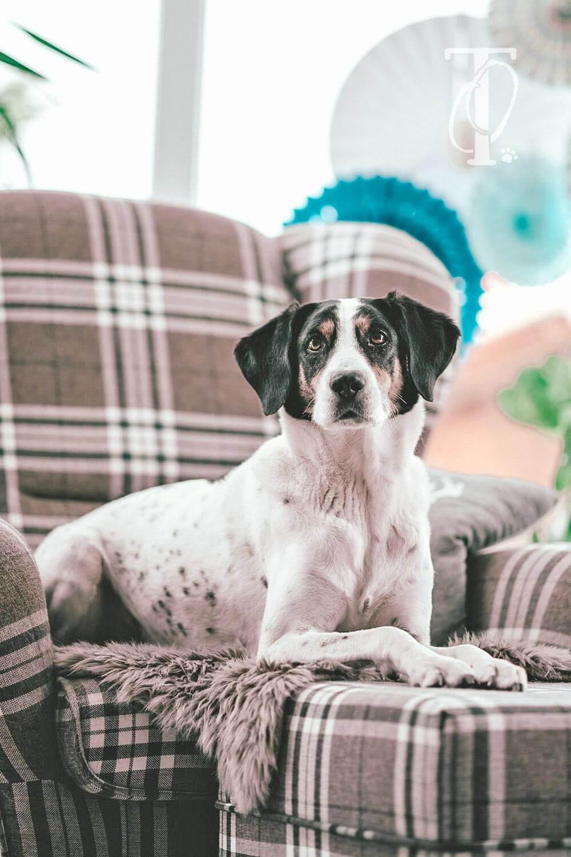 Schnüffelspiele für Hunde