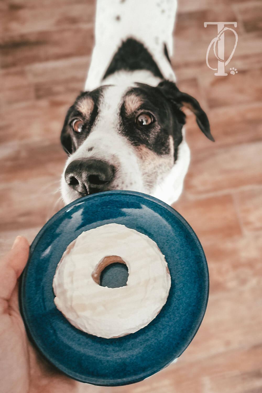 DIY Donuts für Hunde als Leckerli backen