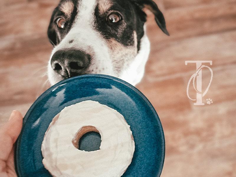 DIY Donuts für Hunde selbermachen