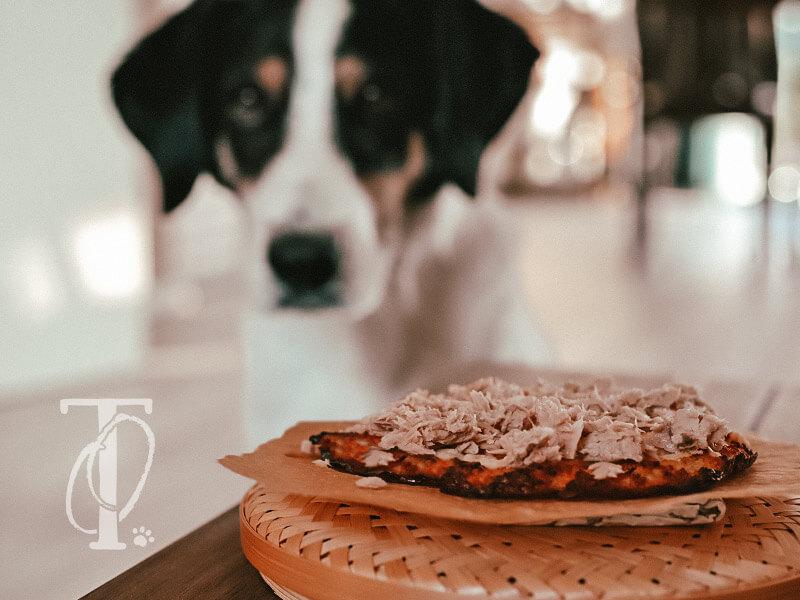 Für Hunde eine Pizza mit Thunfisch und Kartoffeln backen