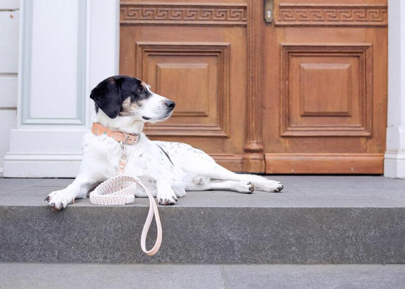 DIY Anleitung für Hundeleine aus Leder und Makramee