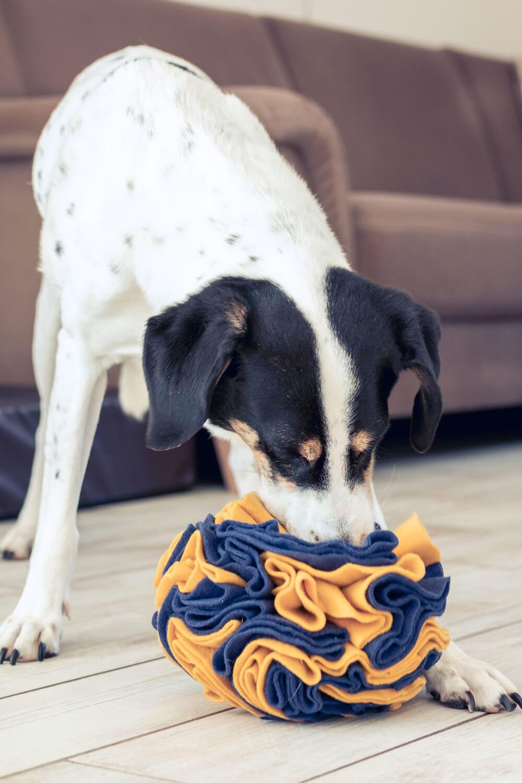 Fleece-Ball als Schnüffelspiel für deinen Hund