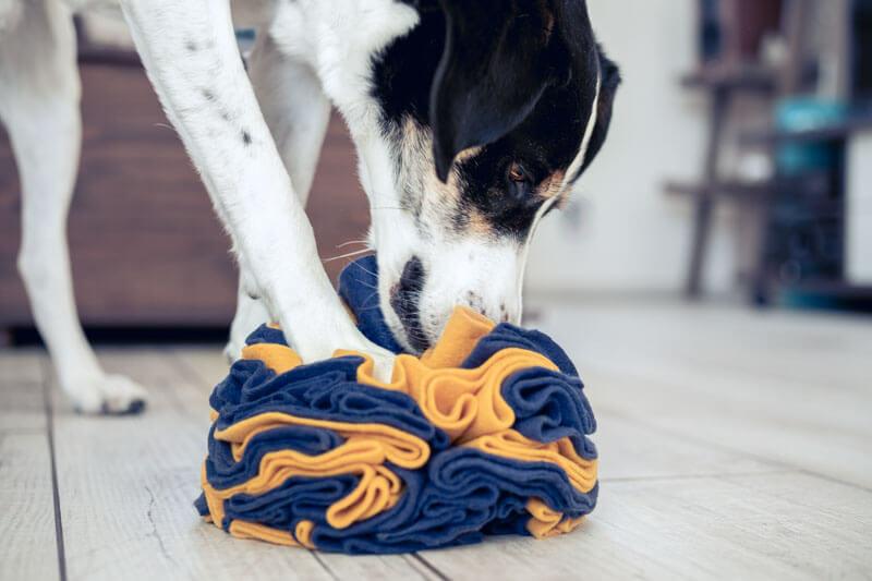 Einen Schnüffelball basteln für deinen Hund