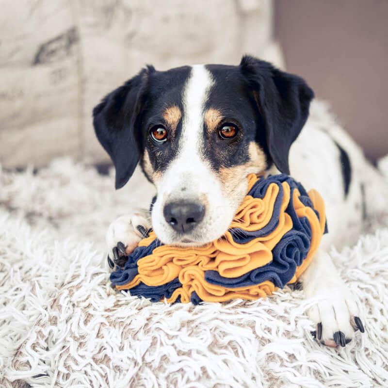 Schnüffelspielzeug für Hund selbermachen