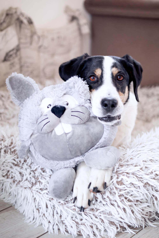 Hund und Osterhase - Spielzeug für Hunde