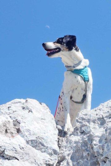 [Hunde]Leben – Unser Rückblick #06/21