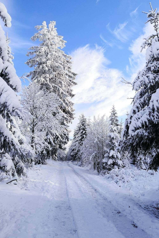 Schnee im Dezember bei Hundeblog Herr Olaf