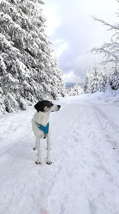 Im Dezember gab es Schnee für den Hund