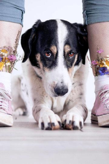 Gassitrott adé – auf neuen Wegen mit deinem Hund (Challenge)
