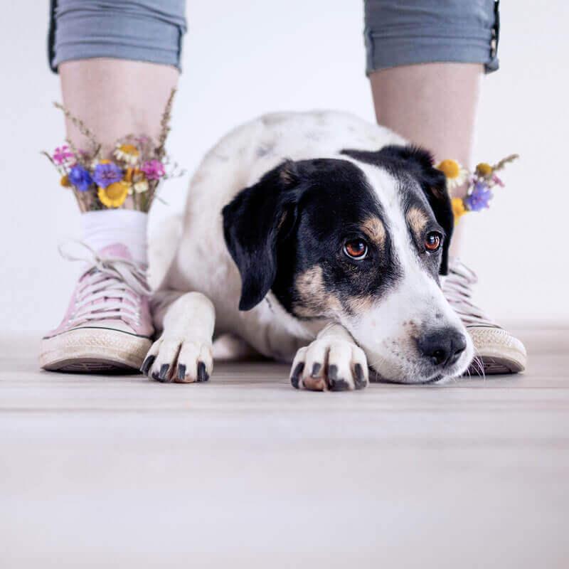 Gehe auf neuen Wegen zum Ziel mit deinem Hund (Challenge)