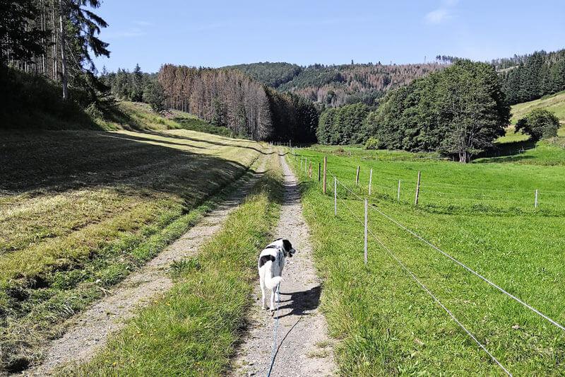 Spaziergang auf neuen Wegen mit Hund