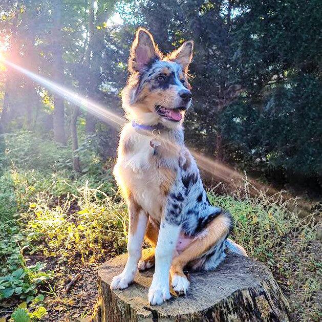 Gassitrott adé - auf neuen Wegen mit deinem Hund (Challenge)